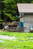Tjur på lantgården i stallen fotografering för bildbyråer