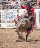 Tjur Rider Hanging On Arkivfoto