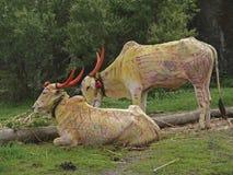 Tjurar dekoreras för tjurfestival arkivbilder