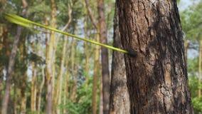 Tjuren är ögat Pilen slogg trädet arkivfilmer