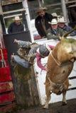Tjuren överför ryttaren till och med luften Royaltyfria Foton