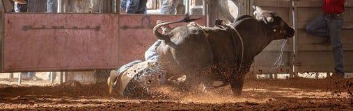 Tjuren sparkar bakut av rodeo för det cowboyRider Into The Dust At landet arkivfoto