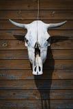 Tjurens skalle som hänger på den träbruna väggen Royaltyfri Fotografi