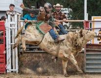 Tjurridning på rodeon arkivfoto