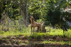 Tjuta hunden med valpen Royaltyfri Fotografi