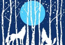 Tjuta vargen med björkträd, vektor stock illustrationer