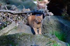 Tjuvjaga katten på en flod royaltyfri fotografi