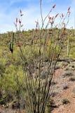 Tkacza Vista Igielny punkt widzenia, Apache złącze, Arizona, Stany Zjednoczone fotografia royalty free