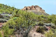 Tkacza Vista Igielny punkt widzenia, Apache złącze, Arizona, Stany Zjednoczone zdjęcie royalty free
