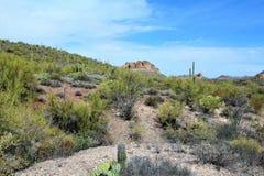 Tkacza Vista Igielny punkt widzenia, Apache złącze, Arizona, Stany Zjednoczone obraz stock