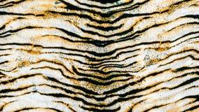 Tkanina na pasiastym tygrysie obraz stock