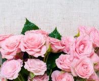 tkaniny szare pościeli menchii róże mokre obraz stock