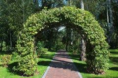 Tkany dąb rozgałęzia się tworzący łuk w pięknym ogródzie Zdjęcia Royalty Free