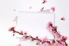 ?tl?je upp anteckningsboken och kvistar av aprikostr?det med blommor p? vit bakgrund placera text Begreppet av v?ren kom, royaltyfri fotografi