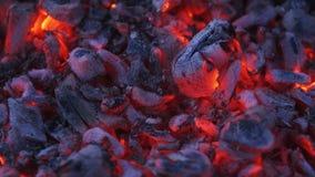 Tlejący węgla zakończenie up Palić węgle w ognisku przy nocą Zbutwiały węgiel drzewny zdjęcie wideo