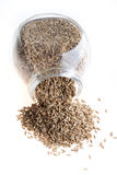 Tmin, caraway, cumin. From glass on white background royalty free stock images