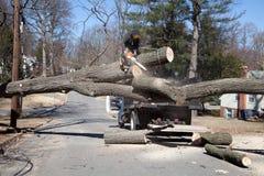 Tnący drzewo Obraz Royalty Free