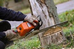 Tnący drzewo Z piłą łańcuchową zdjęcia royalty free