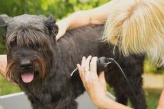 Tnący pies z maszyną Fotografia Stock