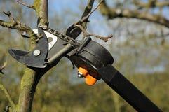 tnący drzewo Zdjęcia Stock