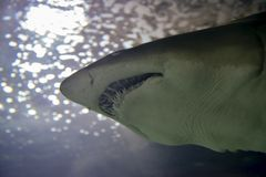 Tänder från en haj Royaltyfri Fotografi