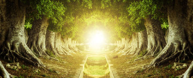 Túnel del árbol Imagenes de archivo