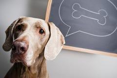 tänka för hund Arkivbild