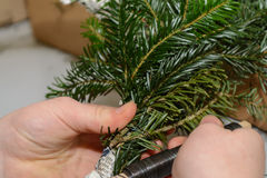 To bind Pines branch at Advent wreath Stock Images