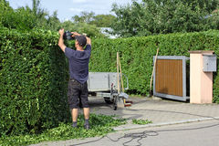 To Clip a hedge, gardening Royalty Free Stock Image