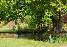 About To Cross Over. Looking ar the Japanese Bridge next to the tree at Exbury Gardens royalty free stock photo