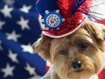 4to del perro patriótico de julio con el sombrero Fotos de archivo