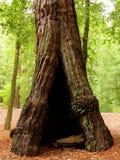 to drzewo Zdjęcie Stock