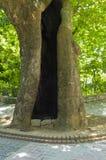 to drzewo Zdjęcie Royalty Free