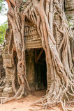 To Embrace. Roots in Angkor Complex Stock Photos
