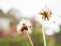 To fade. The small floras in garden and it blowing in the wind Stock Photo