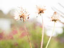 To fade. The small floras in garden and it blowing in the wind Stock Images