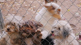 To feed from the hands of a lot of dogs in a kennel or animal shelter. Dogs grab pieces of food through the mesh stock footage