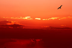 Free To Fly Up Above The Sky Royalty Free Stock Photography - 886057