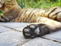 Cute Cat feet close up. To give a cat feet a close-up on stair Royalty Free Stock Photography