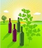 To grow wine Stock Photo