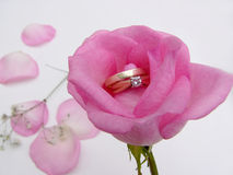 To have and to hold. Rose with rings in the middle royalty free stock photo