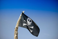 To hoist the flag of the pirates Royalty Free Stock Photos