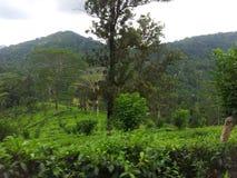 To jest istnego wizerunku zieleń i błękitny mieszany naturalny drzewny prącie obrazy stock