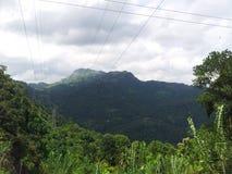 To jest istnego wizerunku zieleń i błękitny mieszany naturalny drzewny prącie fotografia royalty free