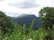 To jest istnego wizerunku zieleń i błękitny mieszany naturalny drzewny prącie zdjęcie stock