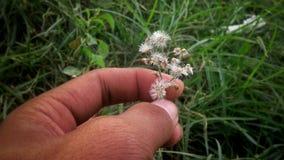 To jest kwiaty Zdjęcie Royalty Free