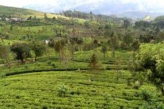 To jest ohiya herbaciany nieruchomość blisko Horton miejsca obrazy stock