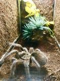 To jest pająk w Wietnam typ obraz stock