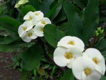 To jest piękni kwiaty Zdjęcia Royalty Free