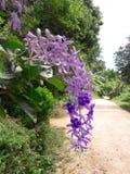 To jest piękni kwiaty Zdjęcie Royalty Free